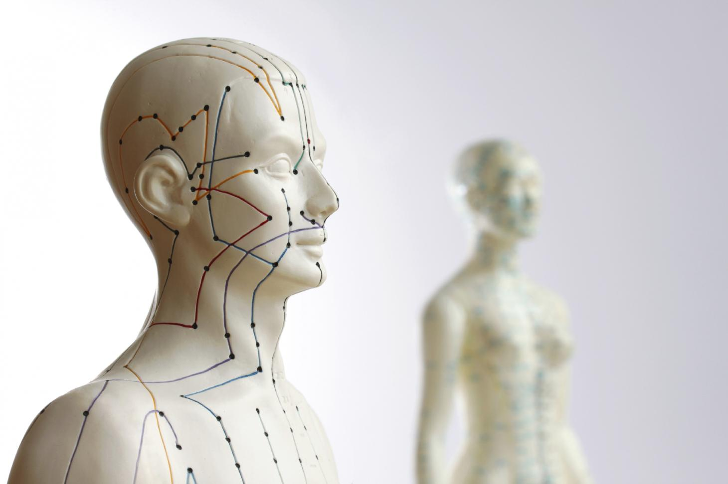 Acupuncture Meridian Lines